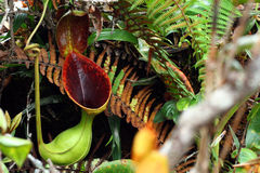 φυτό σταμνών Στοκ φωτογραφία με δικαίωμα ελεύθερης χρήσης