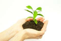Φυτό στα χέρια Στοκ Εικόνες