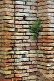 Φυτό στον τοίχο Στοκ φωτογραφίες με δικαίωμα ελεύθερης χρήσης