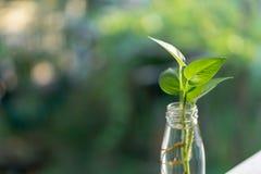 Φυτό στο μπουκάλι Στοκ εικόνες με δικαίωμα ελεύθερης χρήσης