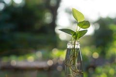 Φυτό στο μπουκάλι Στοκ Εικόνες