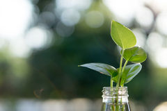 Φυτό στο μπουκάλι Στοκ φωτογραφίες με δικαίωμα ελεύθερης χρήσης