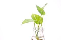 Φυτό στο μπουκάλι Στοκ φωτογραφία με δικαίωμα ελεύθερης χρήσης