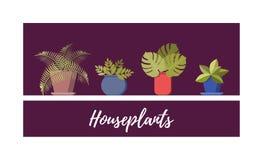 φυτό συλλογής σε δοχεί&om Διαφορετικές εγκαταστάσεις σπιτιών καθορισμένες, διανυσματική επίπεδη απεικόνιση κινούμενων σχεδίων διανυσματική απεικόνιση