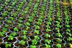 φυτό του δοχείου Στοκ φωτογραφίες με δικαίωμα ελεύθερης χρήσης