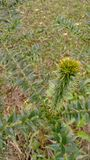 φυτό τραχύ Στοκ εικόνα με δικαίωμα ελεύθερης χρήσης