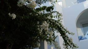 φυτό τροπικό Ο Μπους λουλουδιών φιλμ μικρού μήκους