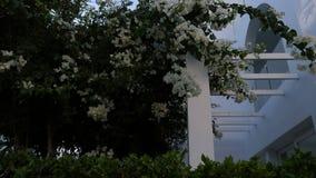 φυτό τροπικό Ο Μπους λουλουδιών απόθεμα βίντεο