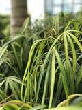 φυτό τροπικό Στοκ εικόνα με δικαίωμα ελεύθερης χρήσης