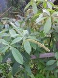 φυτό τροπικό στοκ φωτογραφίες