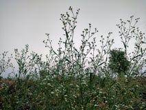 φυτό τροπικό Στοκ Εικόνες