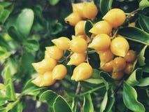 φυτό τροπικό Στοκ φωτογραφίες με δικαίωμα ελεύθερης χρήσης