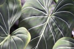 φυτό τροπικό Στοκ εικόνες με δικαίωμα ελεύθερης χρήσης