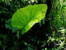 φυτό τροπικό Ecoturismo, οικοτουρισμός στη Κόστα Ρίκα στοκ εικόνα