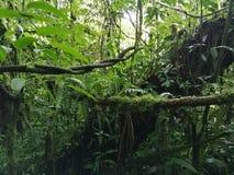 φυτό τροπικό Ecoturismo, οικοτουρισμός στη Κόστα Ρίκα στοκ φωτογραφία