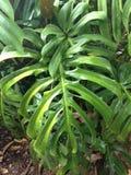 Φυτό των μεγάλων πράσινων φύλλων Στοκ φωτογραφία με δικαίωμα ελεύθερης χρήσης