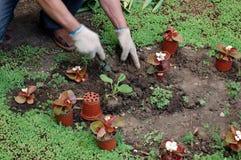 φυτό των σποροφύτων Στοκ Εικόνες