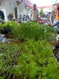φυτό των σπόρων Στοκ φωτογραφίες με δικαίωμα ελεύθερης χρήσης