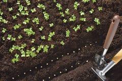 φυτό των σπόρων Στοκ Εικόνες