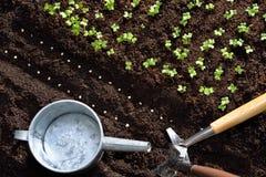 φυτό των σπόρων Στοκ εικόνες με δικαίωμα ελεύθερης χρήσης