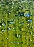φυτό φύλλων σταγονίδιων λεπτομέρειας στοκ φωτογραφία με δικαίωμα ελεύθερης χρήσης