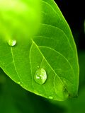 φυτό φύλλων Στοκ Εικόνες