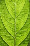 φυτό φύλλων στοκ εικόνα
