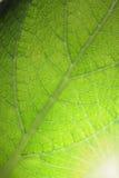 φυτό φύλλων στοκ φωτογραφία