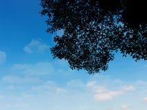 Φυτό φύλλων σκιαγραφιών πέρα από τον ουρανό Στοκ Εικόνες