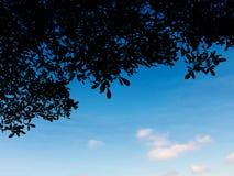 Φυτό φύλλων σκιαγραφιών πέρα από το μπλε ουρανό Στοκ εικόνες με δικαίωμα ελεύθερης χρήσης