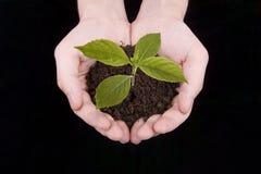 φυτό χεριών Στοκ Εικόνες