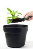 φυτό χορταριών Στοκ Φωτογραφία