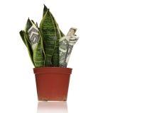 φυτό χρημάτων κατασκευασ Στοκ Εικόνες