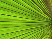 φυτό 01 ανασκόπησης Στοκ Φωτογραφία