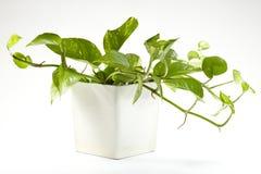 φυτό στοκ φωτογραφίες με δικαίωμα ελεύθερης χρήσης