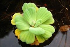 φυτό στοκ εικόνες με δικαίωμα ελεύθερης χρήσης