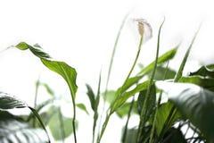 φυτό Στοκ Φωτογραφία