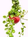 φυτό 20 Στοκ Εικόνες