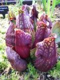 φυτό 3 σταμνών Στοκ Εικόνες