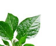 φυτό Στοκ Εικόνα