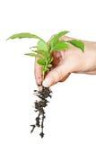 φυτό στοκ φωτογραφία με δικαίωμα ελεύθερης χρήσης