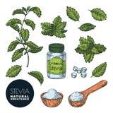 Φυτό Stevia, φύλλα, χάπια σκονών και μπουκαλιών r Φυσική γλυκαντική ουσία, υγιής εναλλακτική λύση ζάχαρης απεικόνιση αποθεμάτων