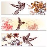 Φυλλάδια που τίθενται με τα κολίβρια και τα λουλούδια Στοκ εικόνες με δικαίωμα ελεύθερης χρήσης