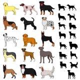 Φυλές σκυλιών καθορισμένες Στοκ εικόνα με δικαίωμα ελεύθερης χρήσης