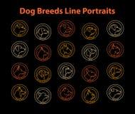 Φυλές σκυλιών Στοκ φωτογραφία με δικαίωμα ελεύθερης χρήσης