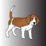 Φυλή λαγωνικών σκυλιών Snoopy του καφετιού μαλλιού σκυλιών Στοκ εικόνα με δικαίωμα ελεύθερης χρήσης