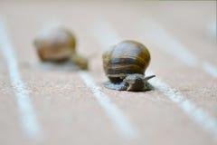 Φυλή σαλιγκαριών που είναι γρηγορότερη; Στοκ Φωτογραφία