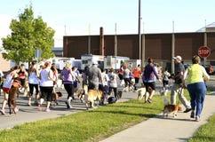 Φυλή σκυλιών μαραθωνίου Fargo Στοκ Εικόνες