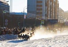 Φυλή στον τάρανδο Στοκ Εικόνα