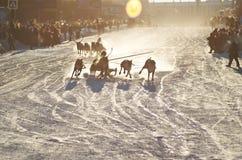 Φυλή στον τάρανδο Στοκ Φωτογραφίες